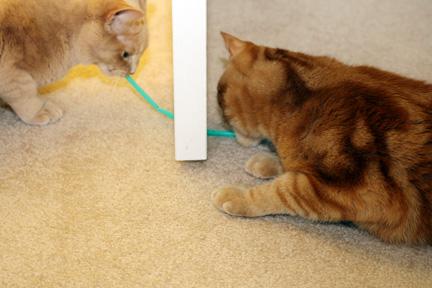 cats_straw