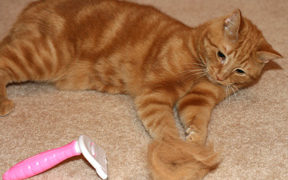 Busting Fur with Bamboo Pet's FurBuster & Giveaway
