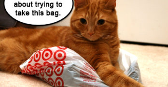 Wordless Wednesday – Cat on a Bag
