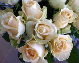 California Blooms Roses