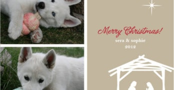 Minted Photo Christmas Card