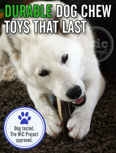 5 Durable Dog Chew Toys for Aggressive Chewers