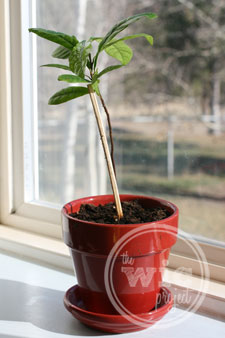 Future Tree