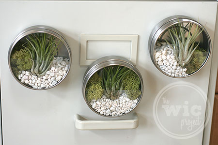 getting crafty with the darby smart mini terrarium diy kit the wic project blog. Black Bedroom Furniture Sets. Home Design Ideas