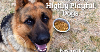 7 Habits of Highly Playful Dogs Powered by Purina® Pro Plan®
