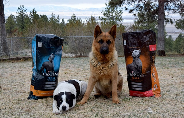 Solomon & Judah waiting for Purina® Pro Plan®