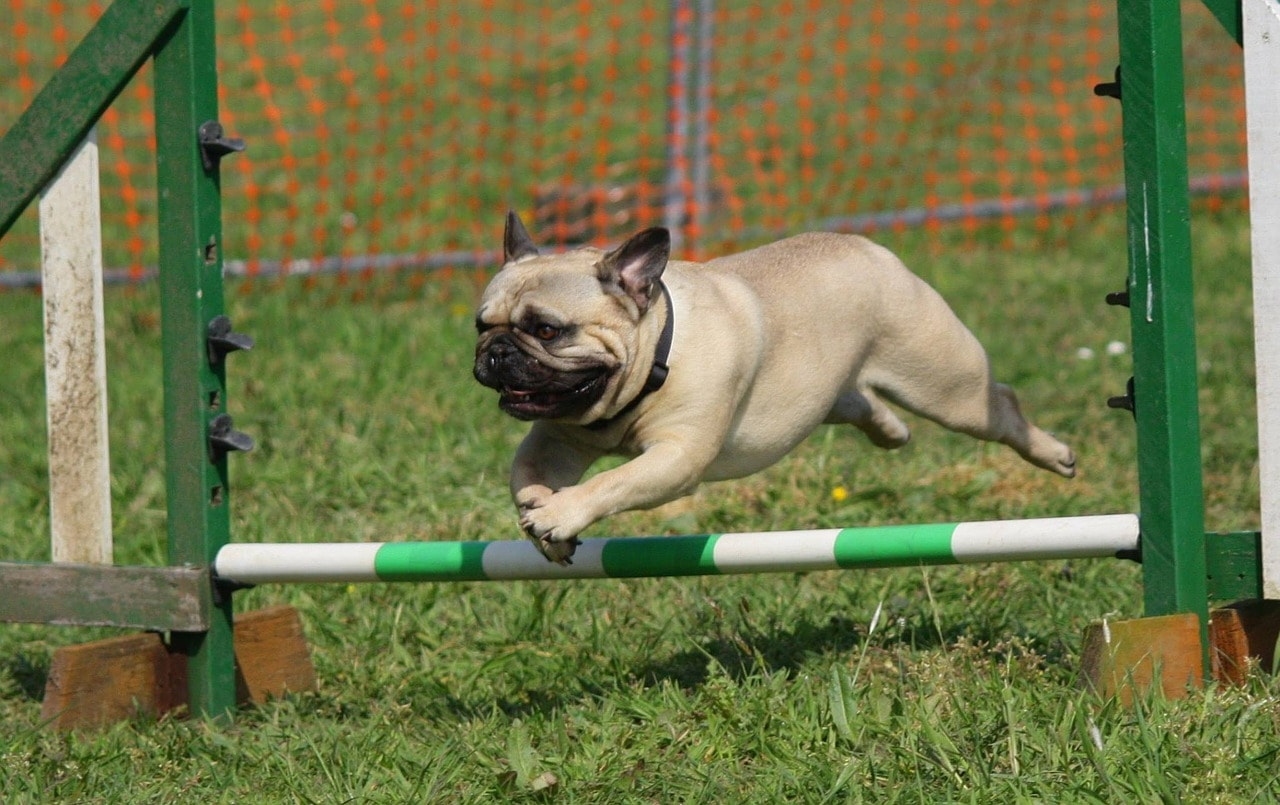 The Ultimate Guide To Training A Stubborn Dog The Wic Project Blog