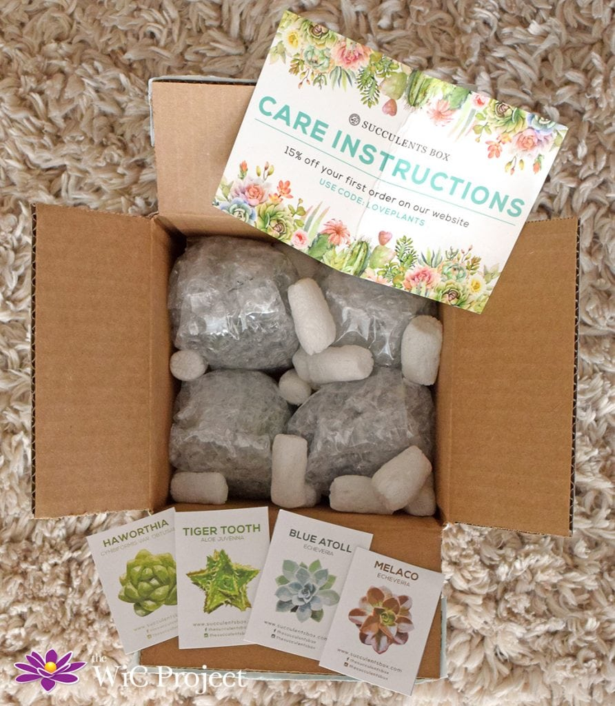 What's Inside a Succulents Box Subscription Box