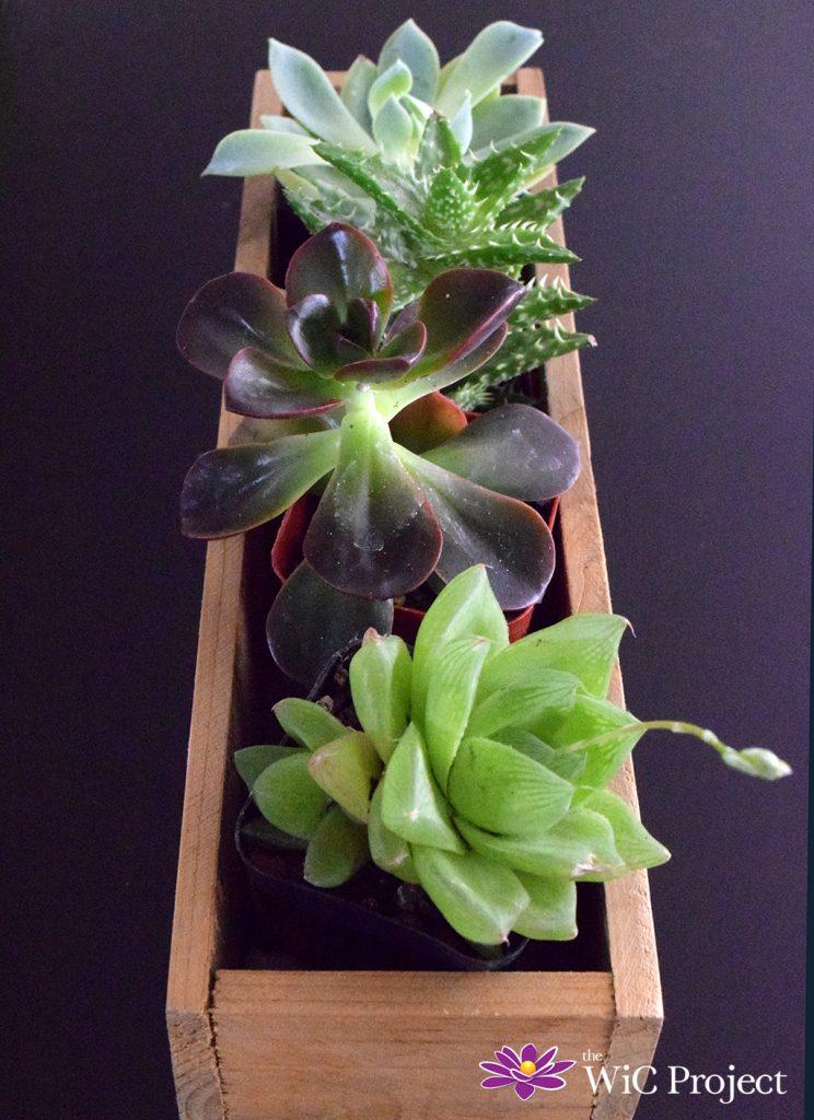 Succulent Box Review: Succulents & Cactus Plants Delivered