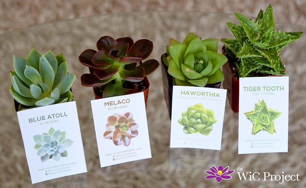 Succulent Box Review: Succulents & Cactus Subscription Box