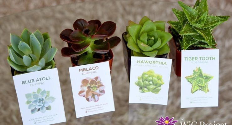 Succulent Box Review: Succulents & Cactus Subscription Box