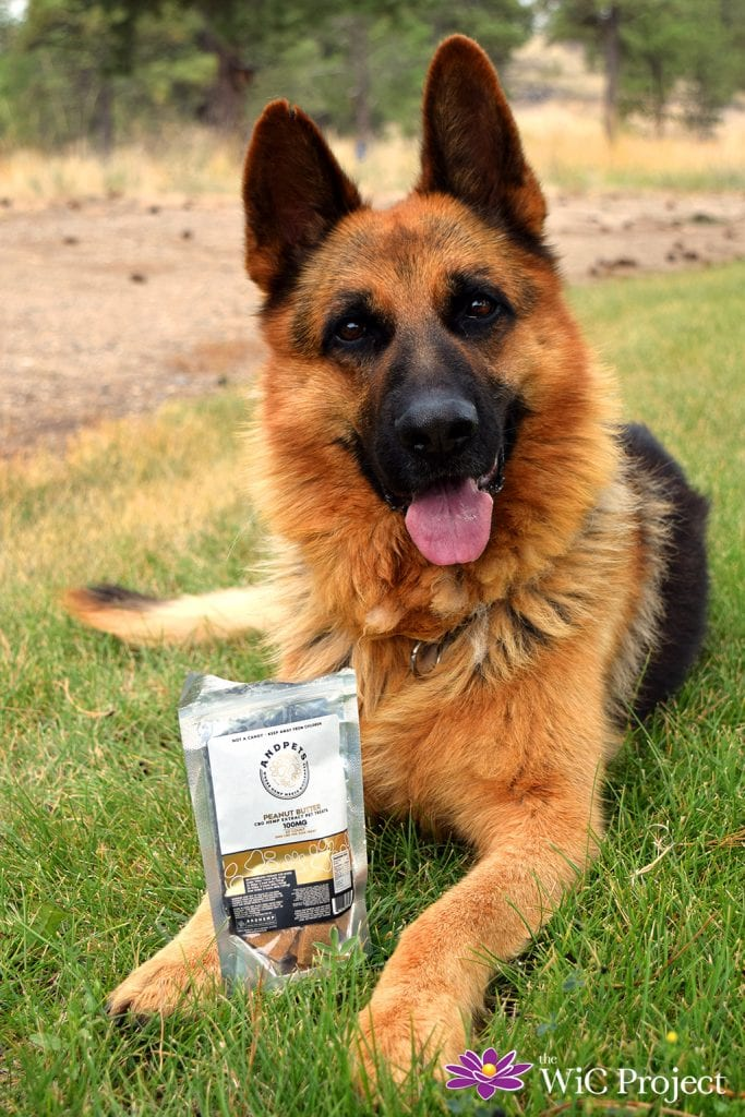 Help Relieve Stress and Anxiety in Your Dog with AndHemp CBD Peanut Butter Dog Treats