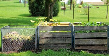 Garden and Compost Bin