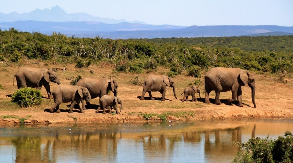 Bucket List Adventures - Elephants
