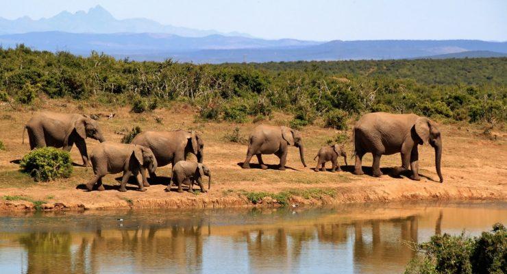 Bucket List Adventures - Elephants